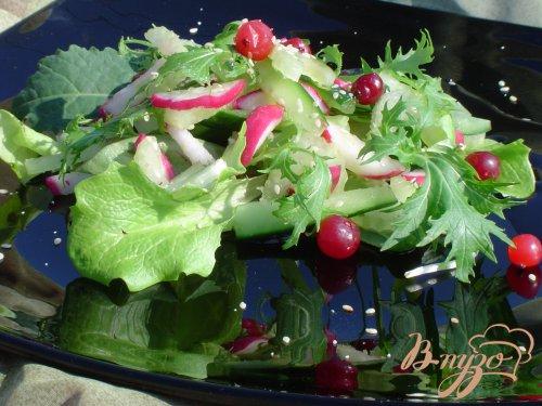 Легкий салат «Весенняя свежесть»