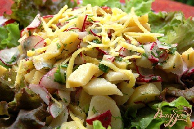 фото рецепта: Картофельный салат с редиской и зеленью