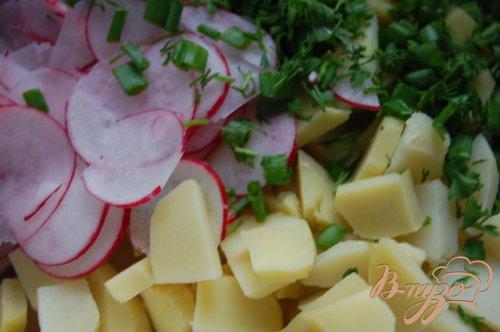 Картофельный салат с редиской и зеленью
