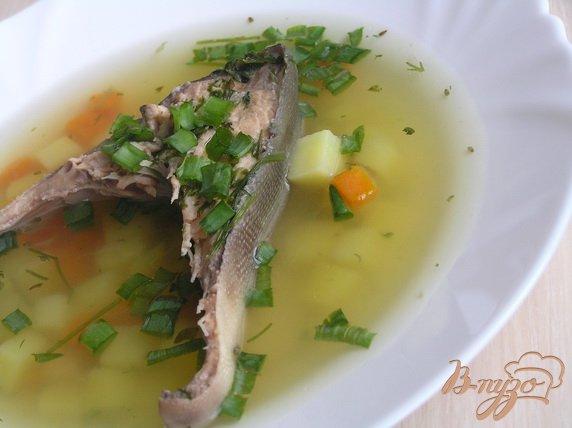 фото рецепта: Суп из судака