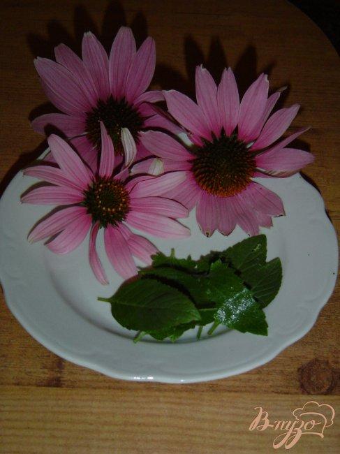 Фото приготовление рецепта: Чай мятный с цветами эхинацеи шаг №1