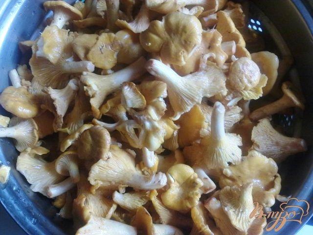 Блюда из лисичек - рецепты с фото на Повар.ру (145 ...