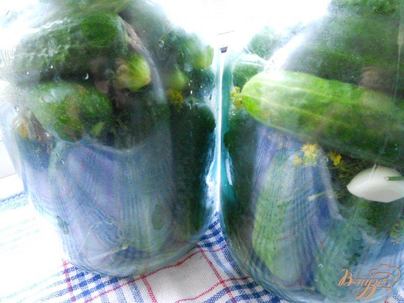 Фото приготовление рецепта: Огурцы маринованные на зиму шаг №2