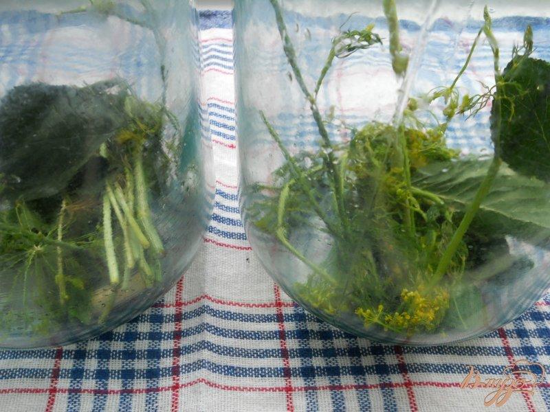 Фото приготовление рецепта: Огурцы маринованные на зиму шаг №1