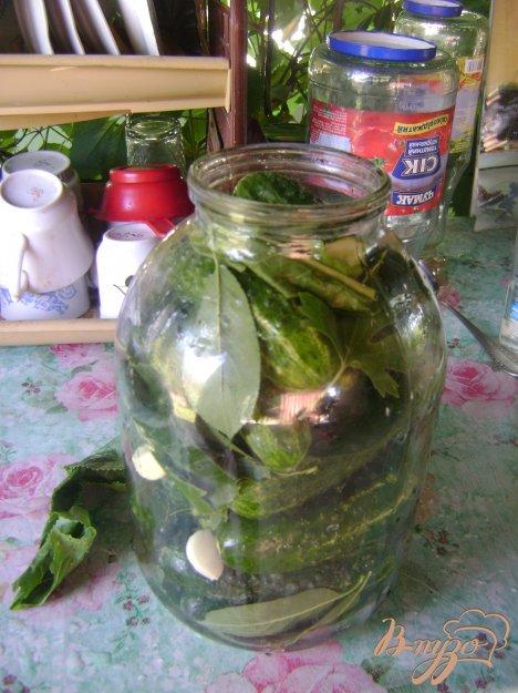 Малосольні огірки. Як приготувати з фото