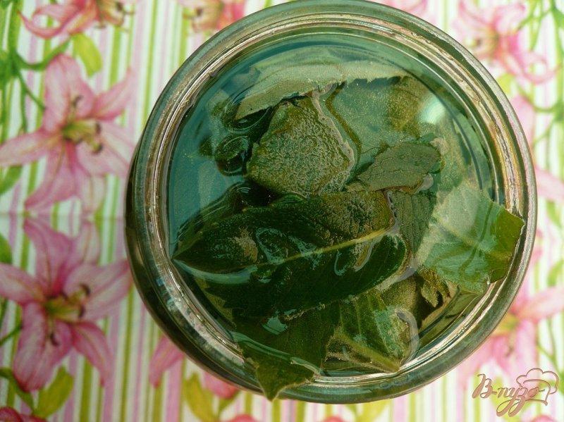 Фото приготовление рецепта: Настойка мятная