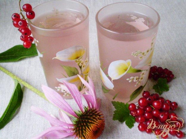Рецепт Напиток из красной смородины и листьев эхинацеи пурпурной