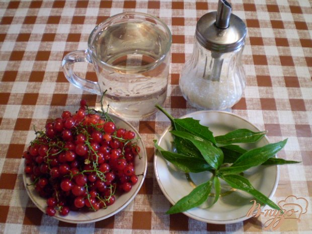 Напиток из красной смородины и листьев эхинацеи пурпурной