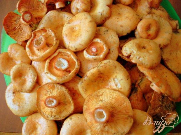 Засолка грибов рыжиков холодным способом