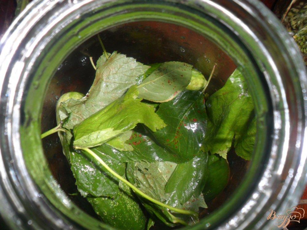 Фото приготовление рецепта: Малосольно- соленные огурцы шаг №3