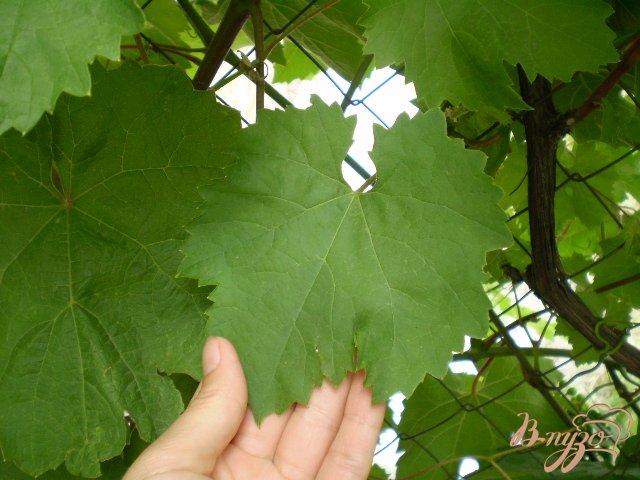 Рецепт Листья виноградные для долмы