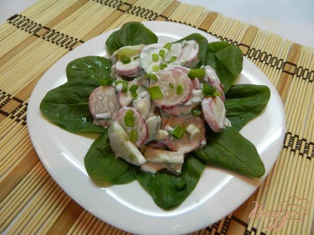 фото рецепта: Салат из редиса и огурца со шпинатом